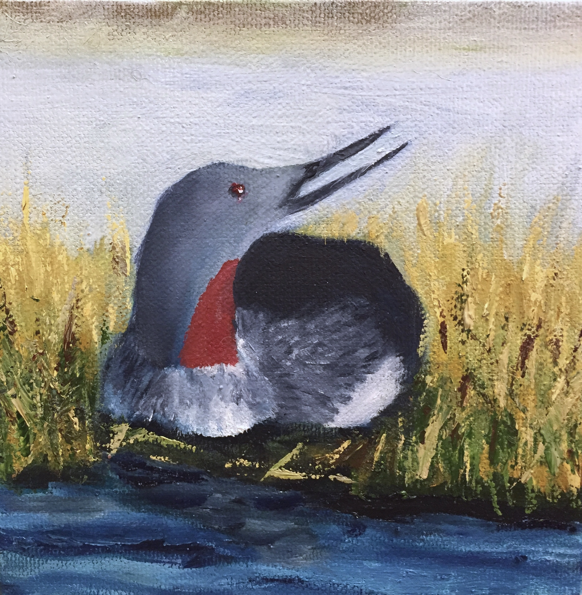 Painting red breasted loon
